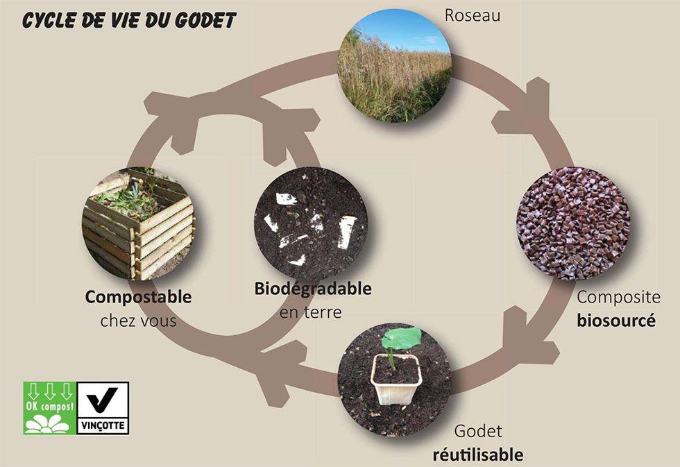 Cycle de vie d'un godet de jardin biodégradable