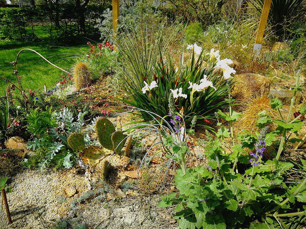 Pépinière Agave et Centaurée