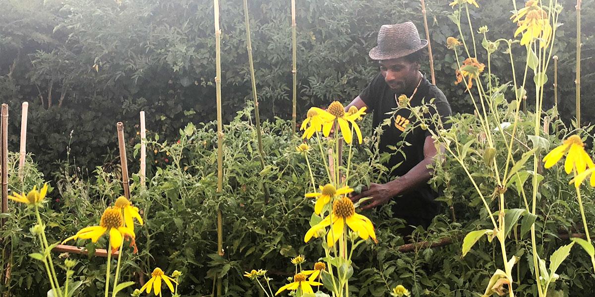 David crée un potager agroécologique chez Claudine