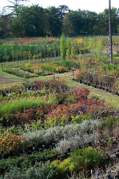 Atelier jardinage à la pépinière Toulze