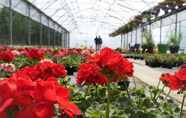Production horticole des Serres de Chazeau