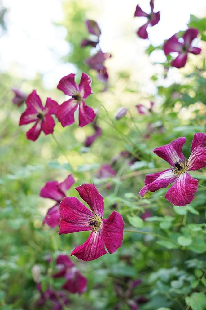 Pépinières Javoy Plantes