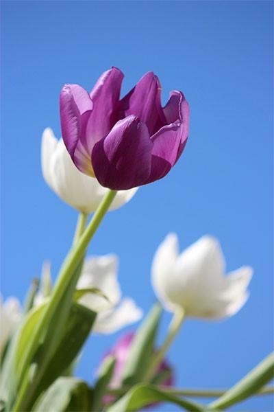 Fête des Fleurs et des Plantes de Dieppe