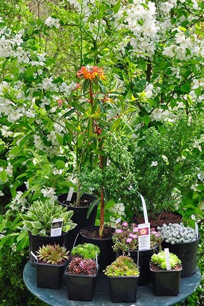 Foire aux plantes à Saint Antoine l'Abbaye