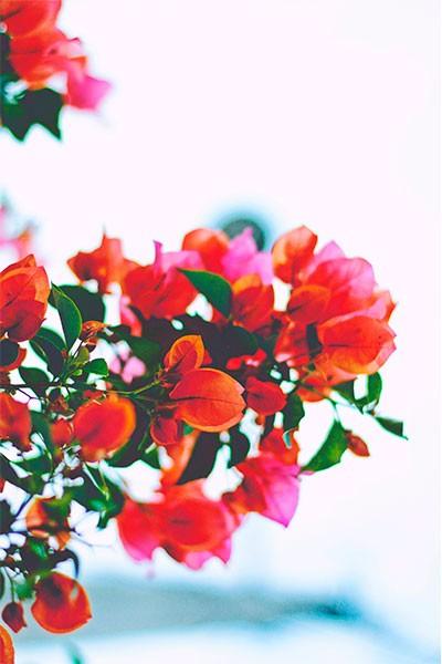 Journée des Plantes rares et de collections à la Valette