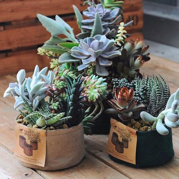 Pot géotextile pour succulentes