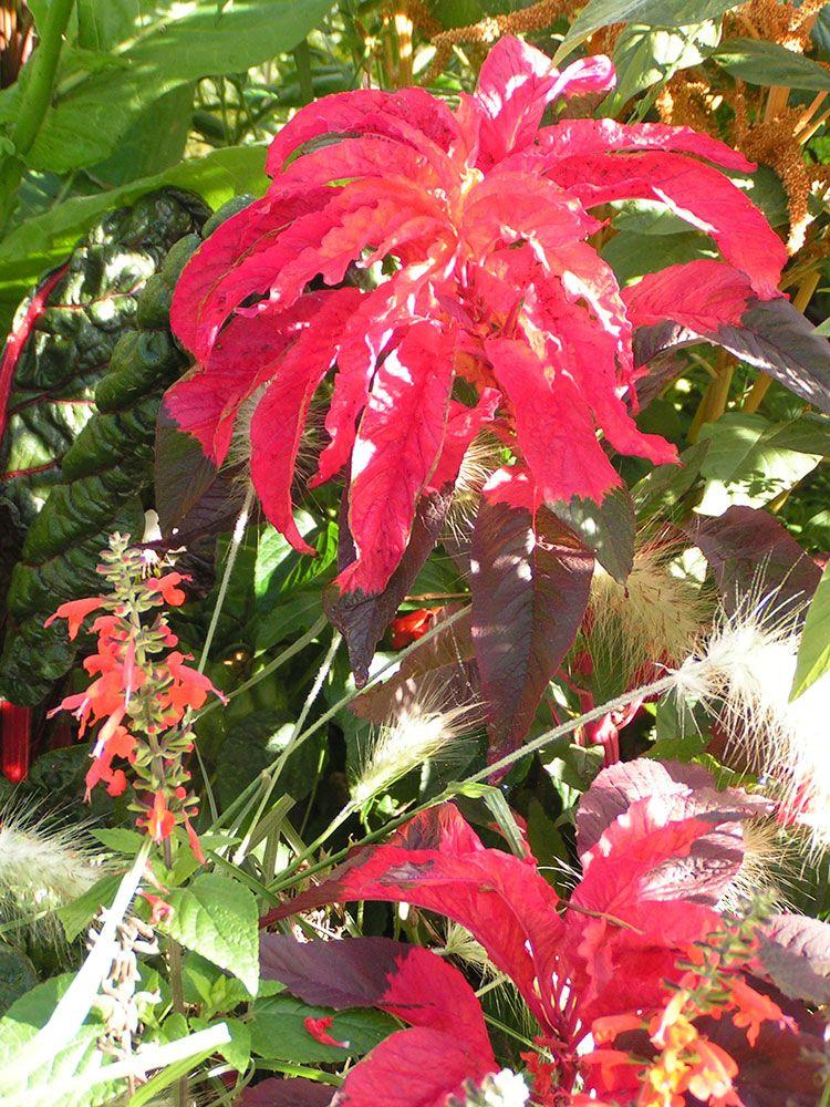Fleurs de Fleury Horticulture