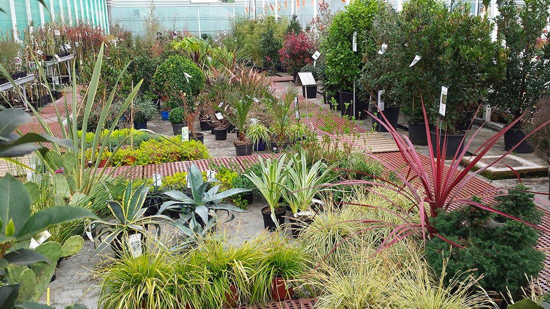 Merel horticulture côté pépinière