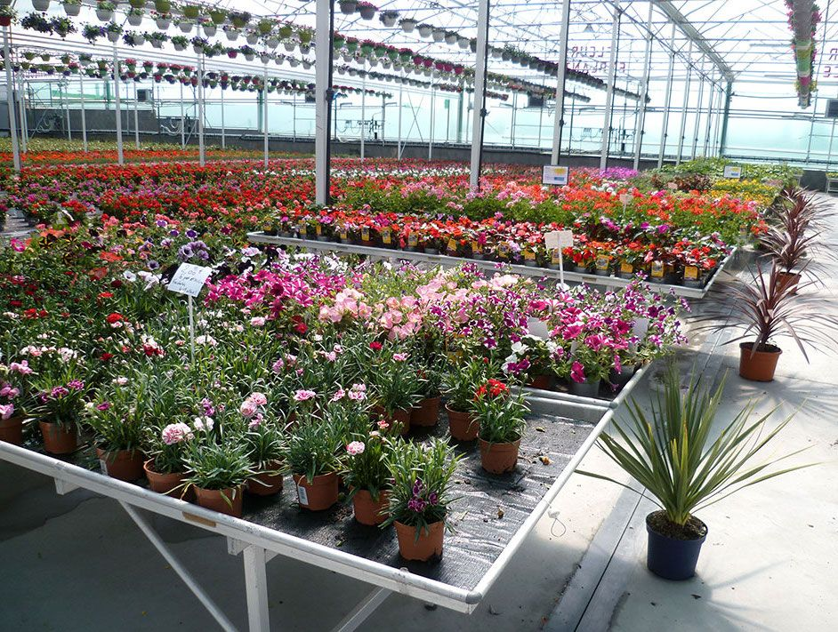 Serres de production de Merel Horticulture