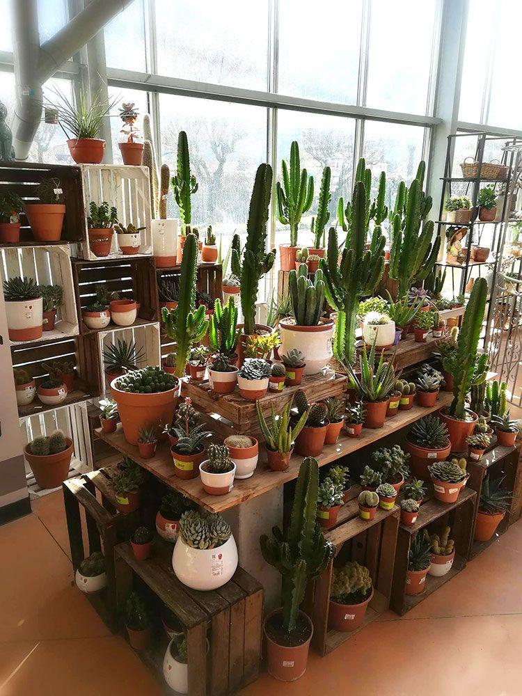 Cactées et succulentes de Pradel Horticulture