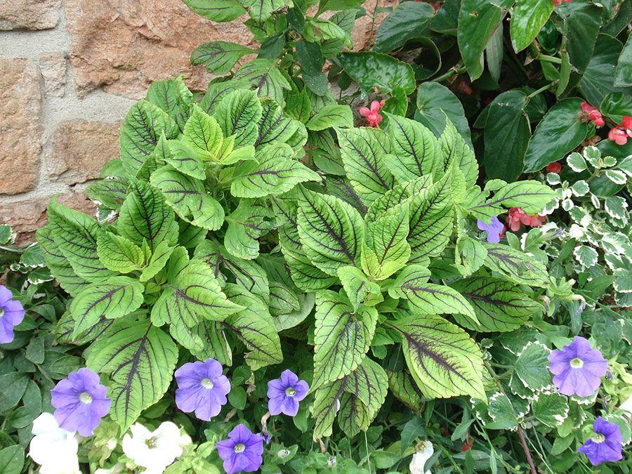 Végétaux Fleury horticulture