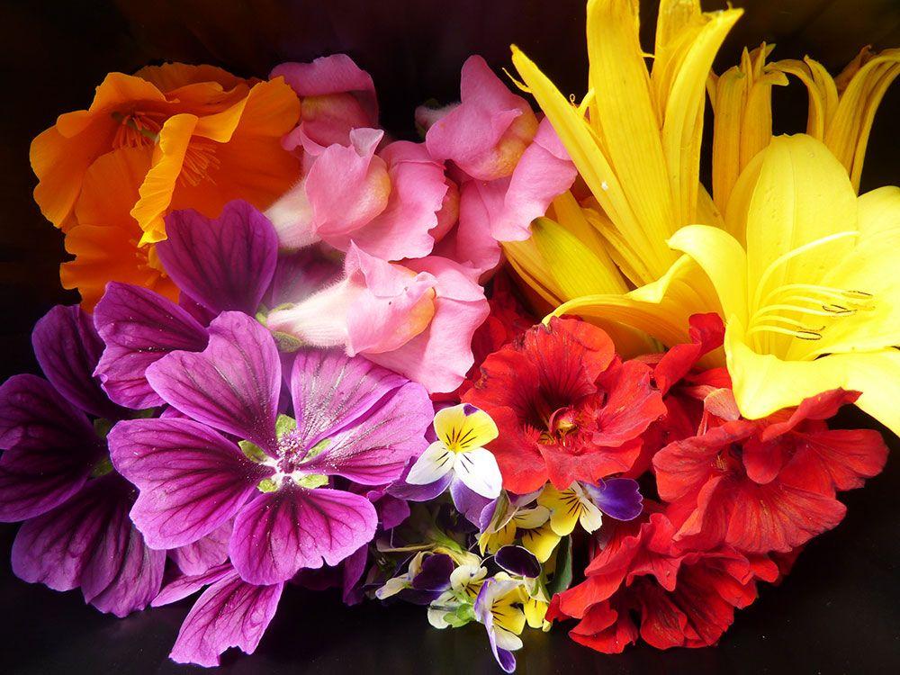 Quelques fleurs comestibles...