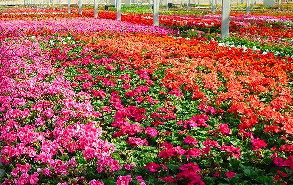 Merel Horticulture