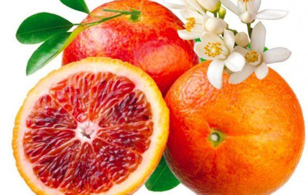 Oranger moro