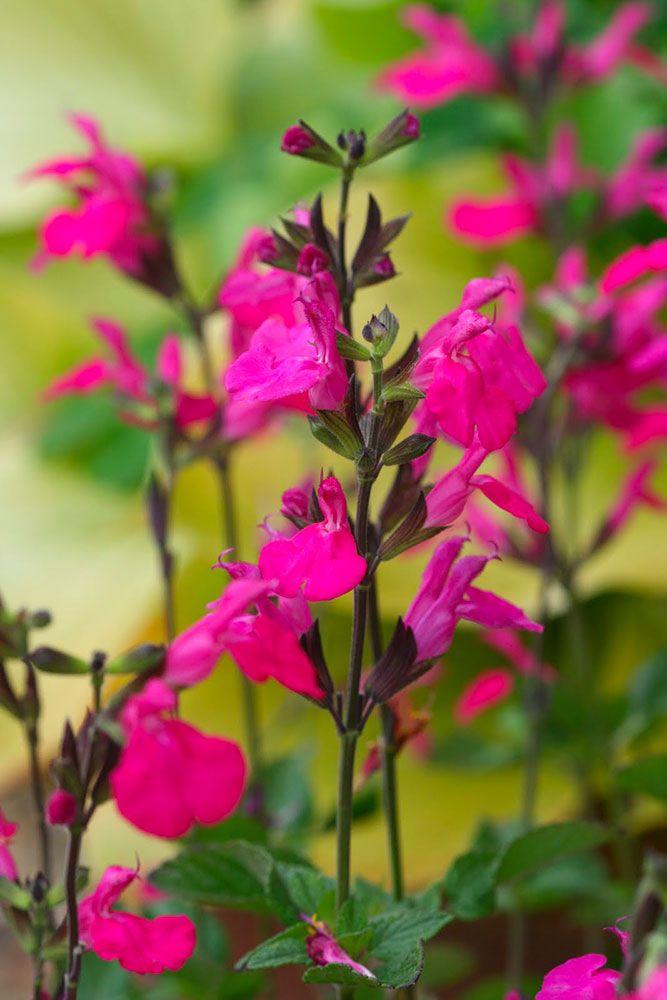 Les fleurs de Fleury Horticulture