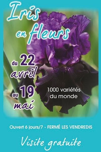 Les iris en fleurs de la Pépinière Iris 26
