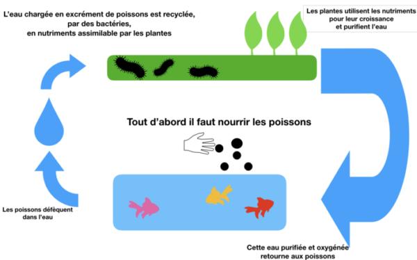 Système aquaponie
