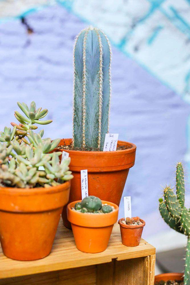 Plantes de The Cactus Corner