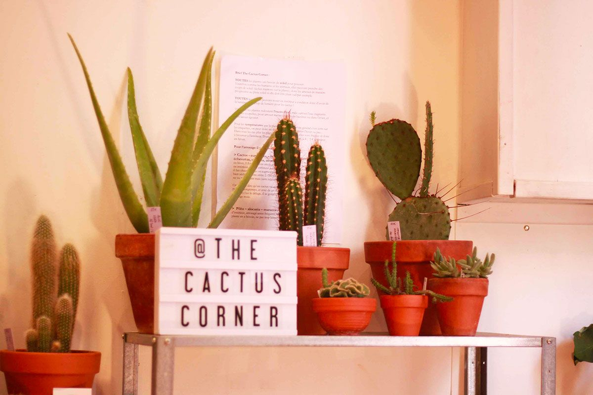 The Cactus Corner