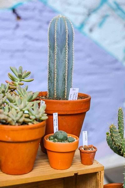 Portes ouvertes The Cactus Corner