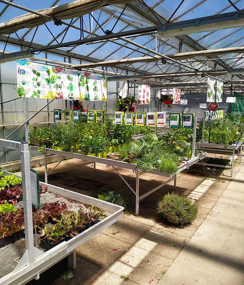 Plants potagers et aromatiques