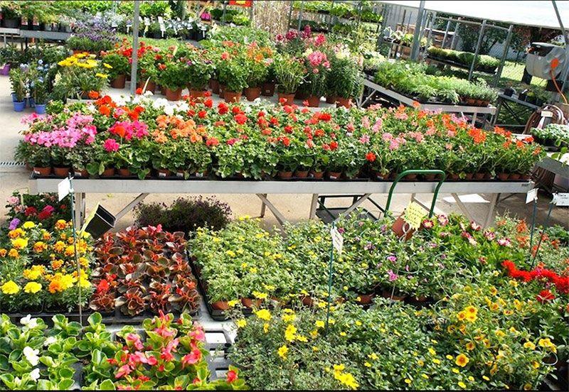 Le marché couvert de de Jardinerie Carté