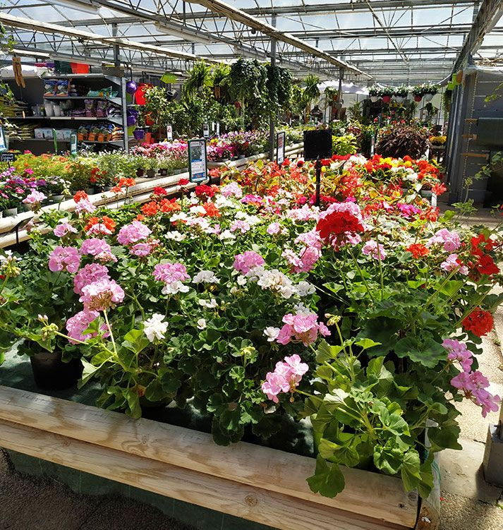 Fleurs Harmony Végétal
