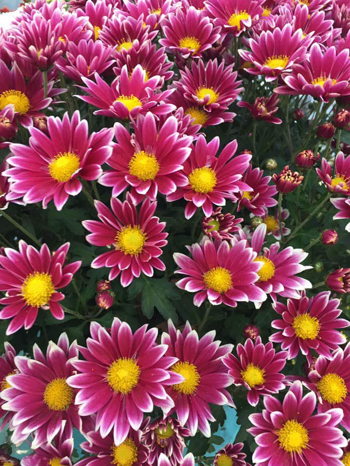 Marché aux fleurs de JardiPlus