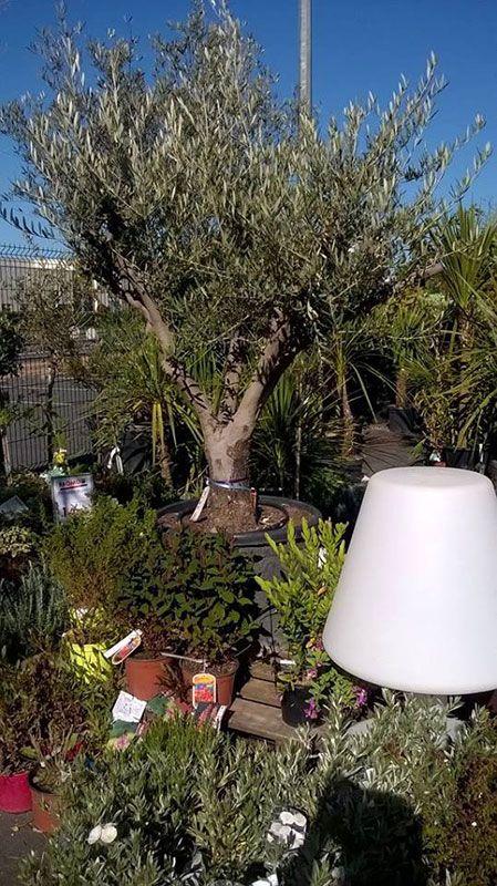 Jardinerie Jardin Décor