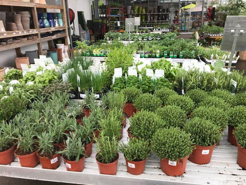 Aromatiques de la Jardinerie Labelle