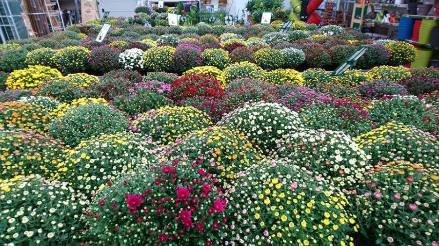Les plantes fleuries de saisons