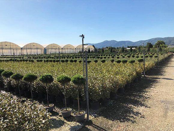 Extérieurs de la Jardinerie Tropic Plantes