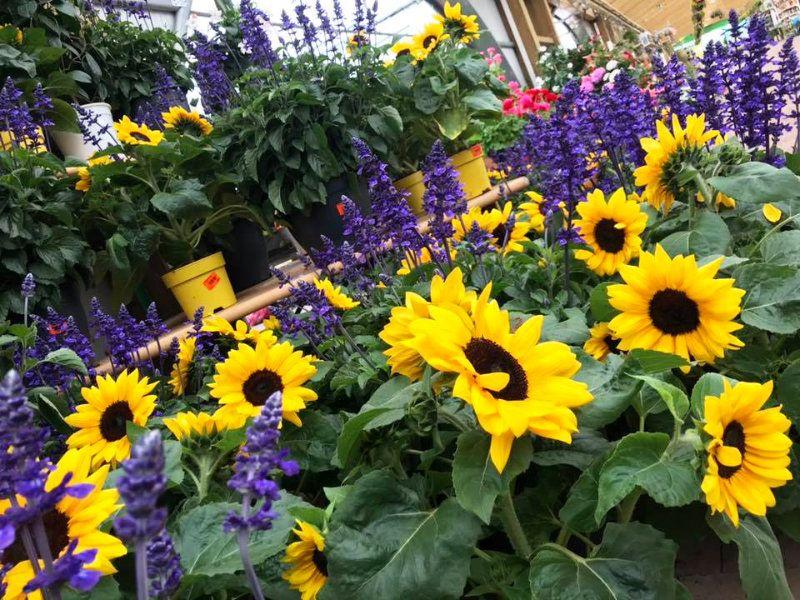 Les fleurs aux Jardins de Parovence