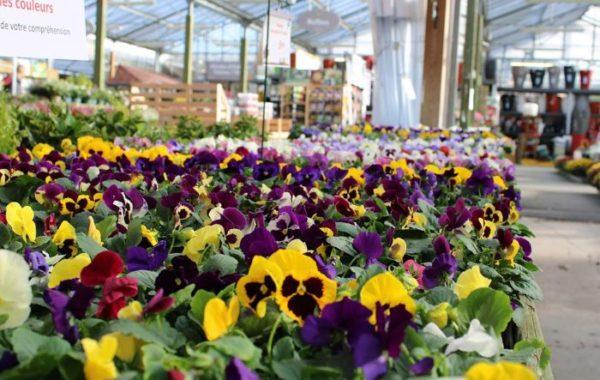 Fleurs de la Jardinerie du Bois Paris