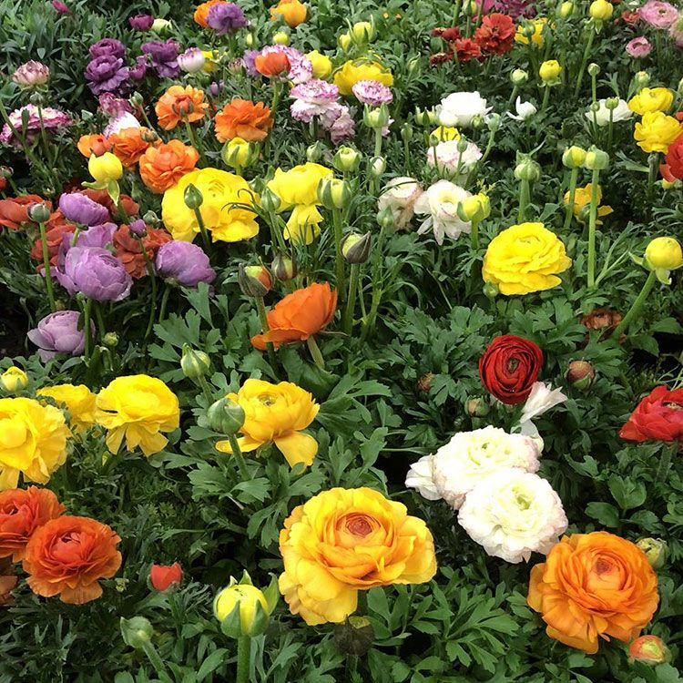 fleurs-jardinerie-du-cap-vert