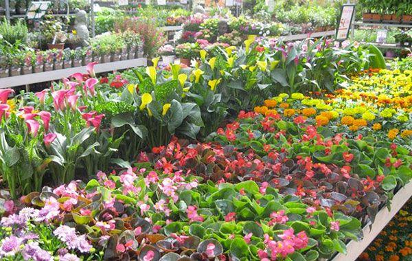 Jardin Décor