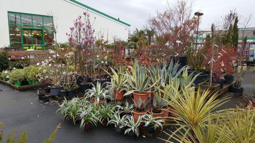 Espace pépinière des jardineries Atlantic Vert