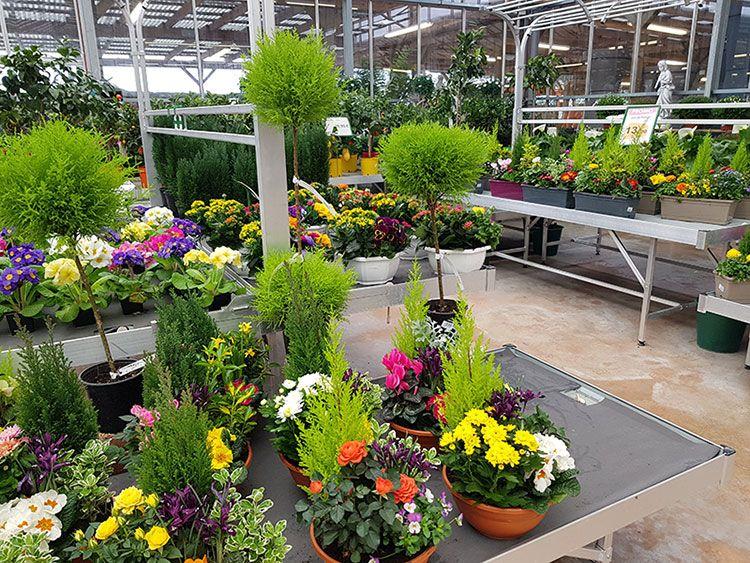 Les fleurs de la jardinerie du Cap Vert