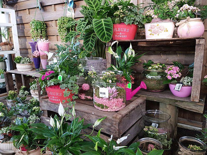 Jardin Decor Jardinerie Independante Paysagisme Et Entretien De Jardin