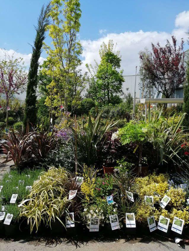 Les végétaux d'extérieur