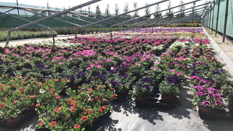 La production horticole des Jardins de Provence