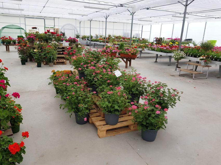 La production horticoles des Jardins d'Olivier
