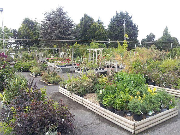 La Jardinerie des Pépinières Chatelain
