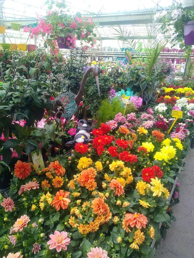 Les fleurs de la Jardinerie Triplet