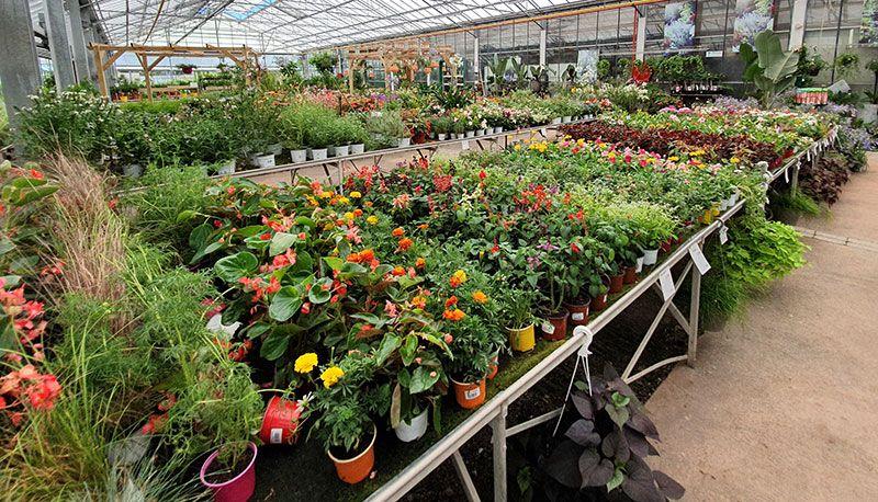 Jardinerie Tropic Plantes