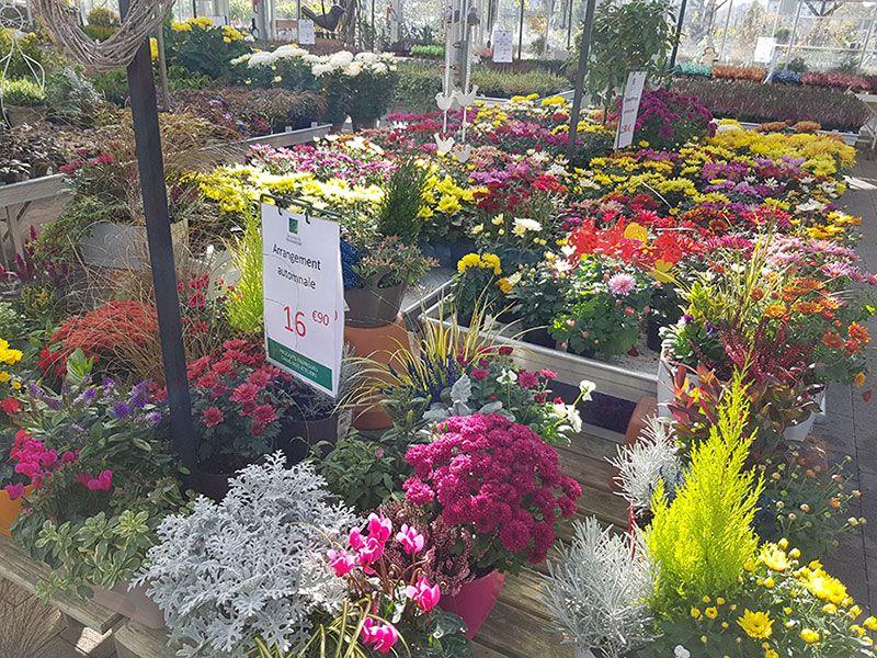 L'horticulture florale des Jardins du Sonnenhof