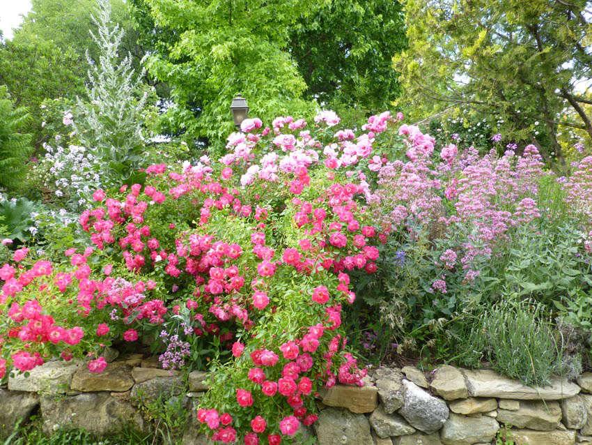 Les roses des jardins de l'Abbaye