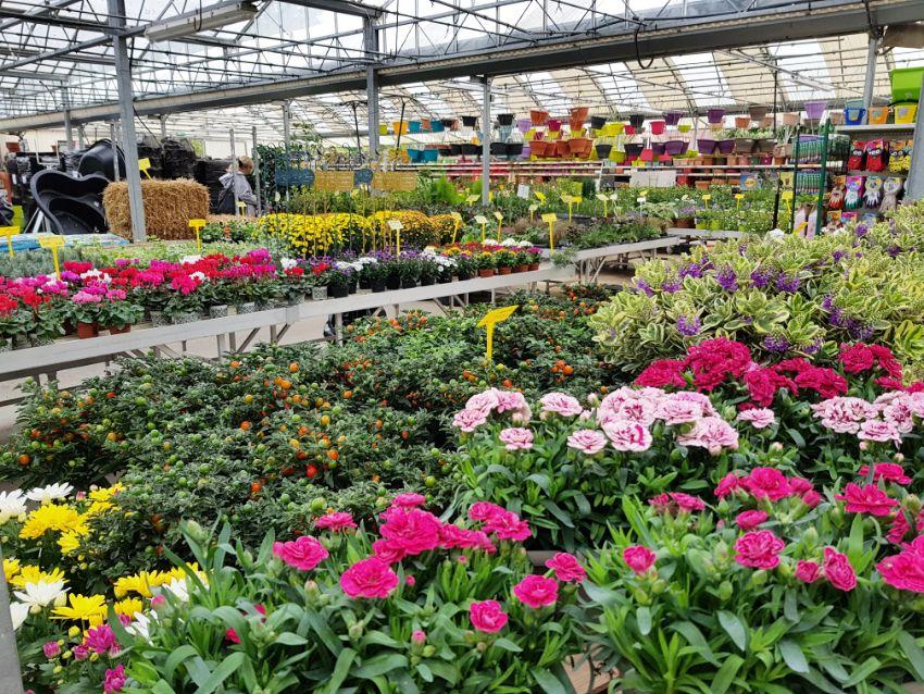 Marché aux fleurs Jardinerie Triplet