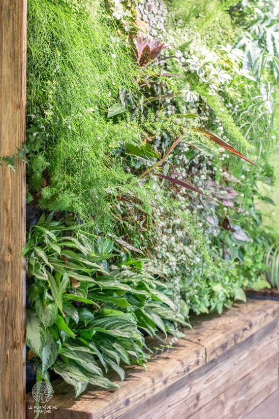 Mur végétal avec ses plantes
