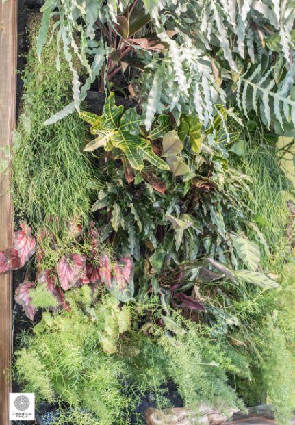 Mur végétal Polyphène